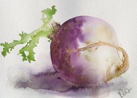 Navet/ Turnip