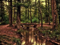 forest-110900_1920.jpg