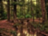forest-110900_1920 (1).jpg