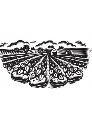 Potato Farm.jpg
