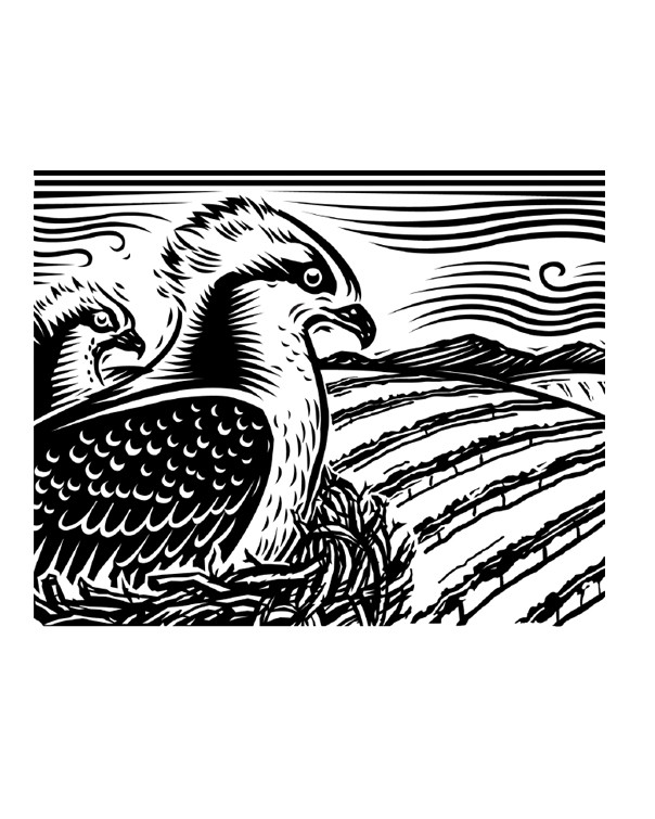 SANDHILL BIRDS.jpg