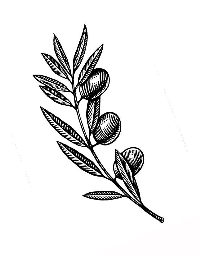 Olives-on-the-Vine.jpg