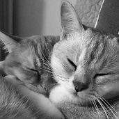 Cat Behaviourist London