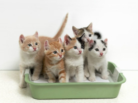 Feline flush: Litter Box 101