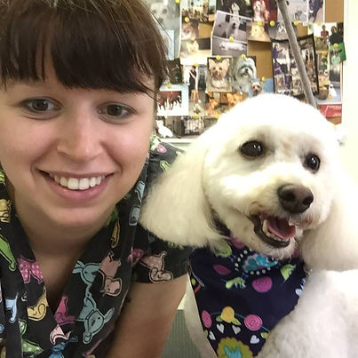 Westward Dog Spa Dog Grooming Tamworth