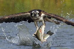 База отдыха и рыбалки