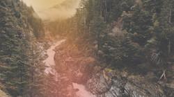 treesbackground