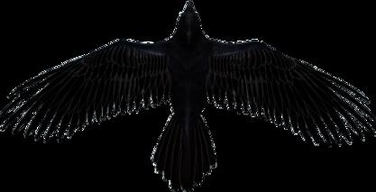 AlqYR8-raven-transparent-picture.png