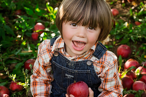 fall apple picking child photography