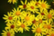 flower-1514060__340.jpg