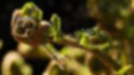 fern-3360828_960_720.jpg