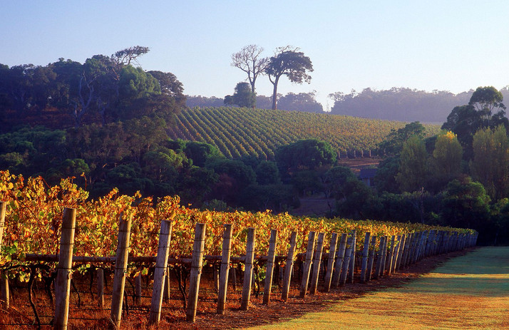 Margaret-River-winery.jpg