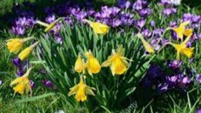 Welcome Spring/Ostar Elixir .5oz Blend Bottle