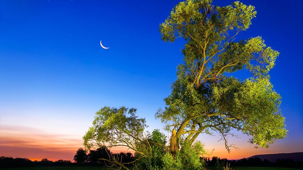 Celtic Ash (Nuin) Tree Flower Essence Blend .5oz
