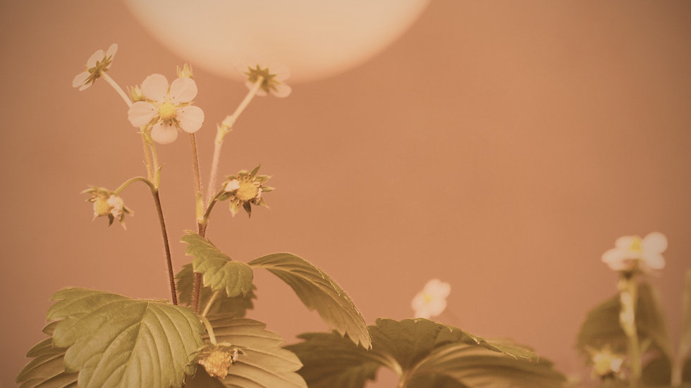 Under a Strawberry Moon Meditation