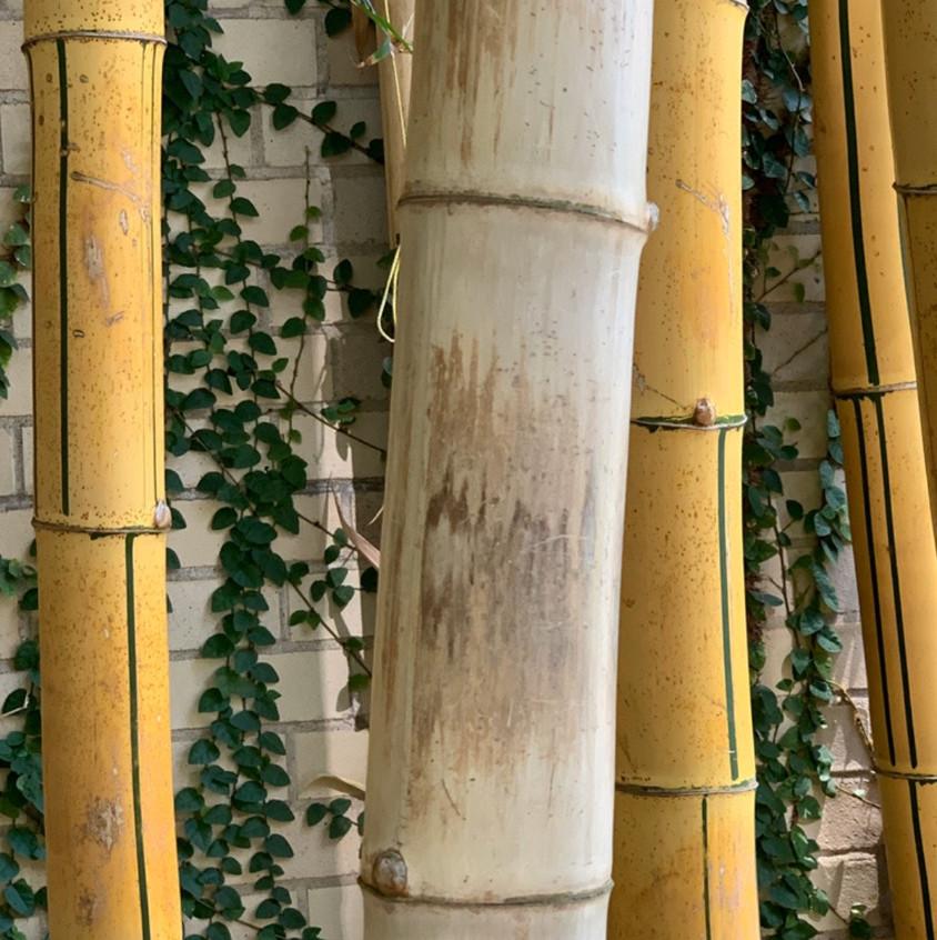 Photos of bamboo sticks