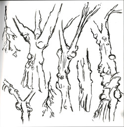 Graveyard trees study