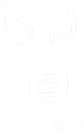 Csak logo.png