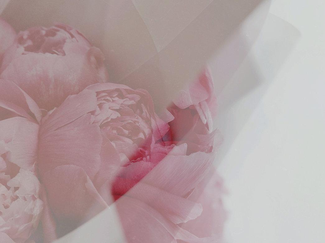 pexels-valeriia-miller-3392757_edited_ed