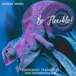 Chameleon Spirit Guide