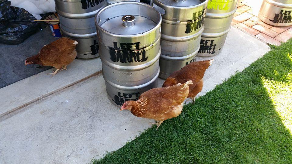 Chickens & Kegs