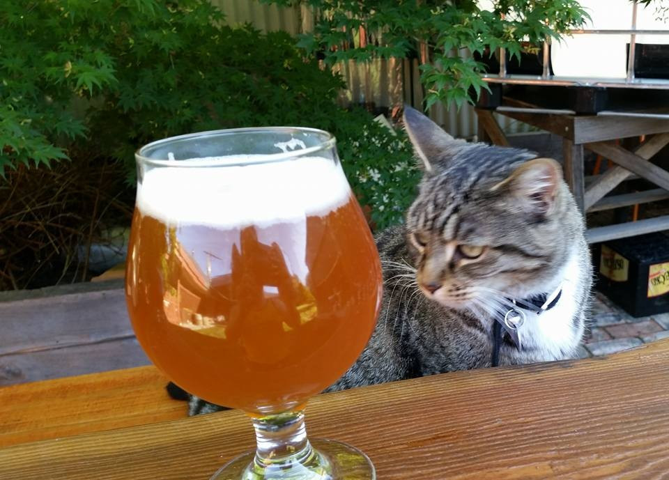 Kitty & Beers