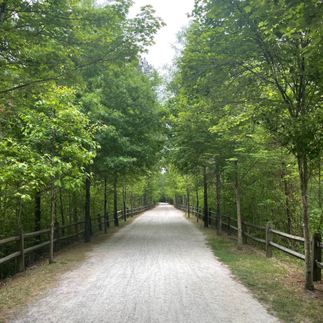 How Forest Bathing improves my interior design work.