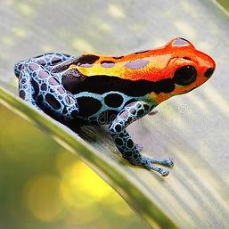 poisonfrog.jpg
