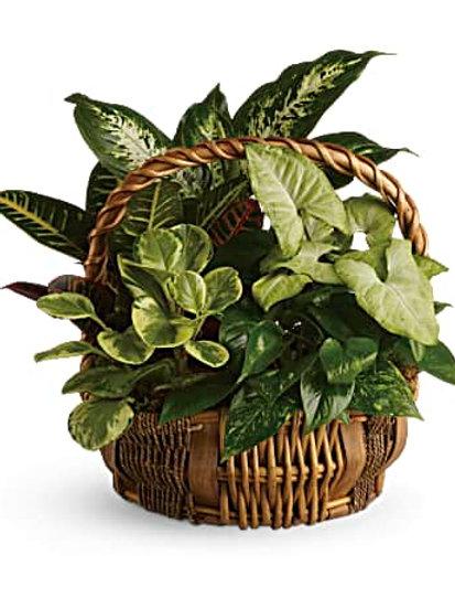 Basket of Plants