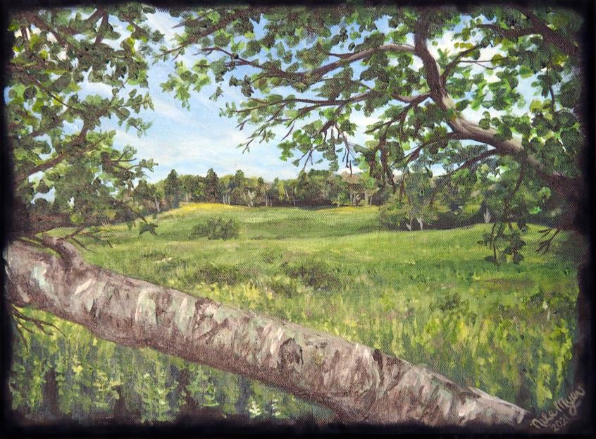 Big Meadow_Skyline.jpg