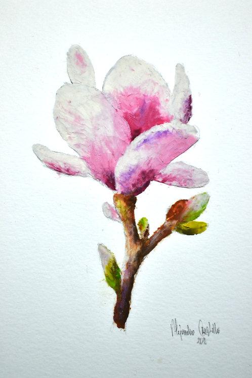 Knete Magnolia