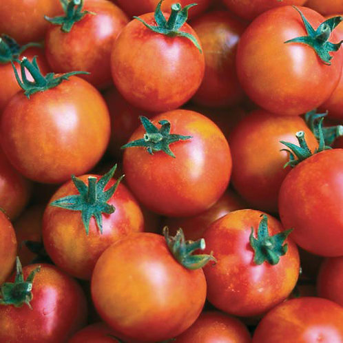 'Isis Candy' cherry tomato
