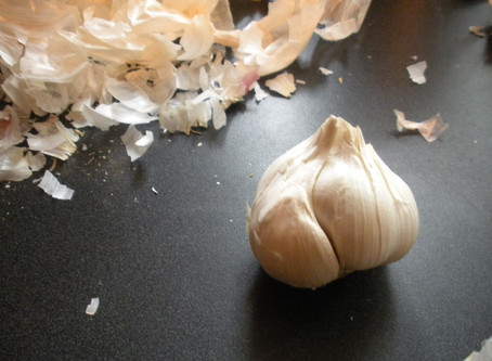 It's garlic planting season, and here's how!