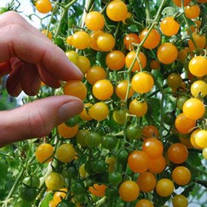 'Gold Rush Currant' tomato