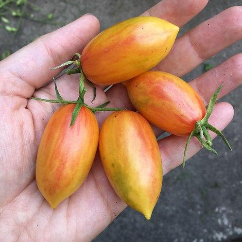 'Blush' tomato