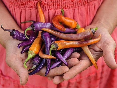 'Buena Mulata' pepper