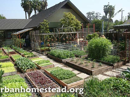 Farm Flip: From a blighted property to an urban farm