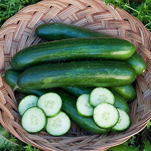 'Green Finger' cucumber