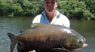 Pesqueiro Pantanosso – Os tambas na pescaria de superfície