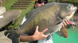 Pesqueiro Pantanosso – Fishingtur e Bóias Barão juntos com os gigantes do Panta