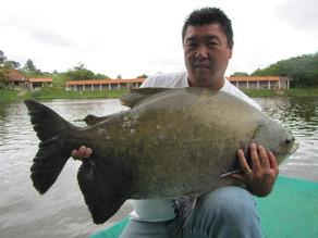 Pesqueiro Pantanosso – Um show de grandes redondos na ponta da linha