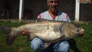 Pesqueiro Pantanosso – O tempo esquentou e as cabeçudas dão um show no panta