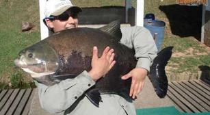 Pesqueiro Pantanosso – Muitas espécies e promessas de grandes brigas