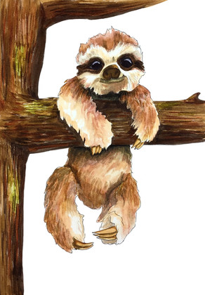 baby_sloth.jpg