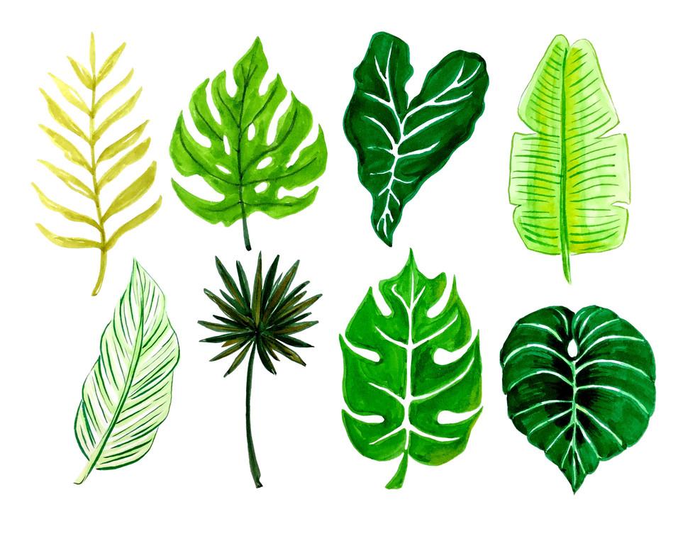 Leaf_Collection.jpg