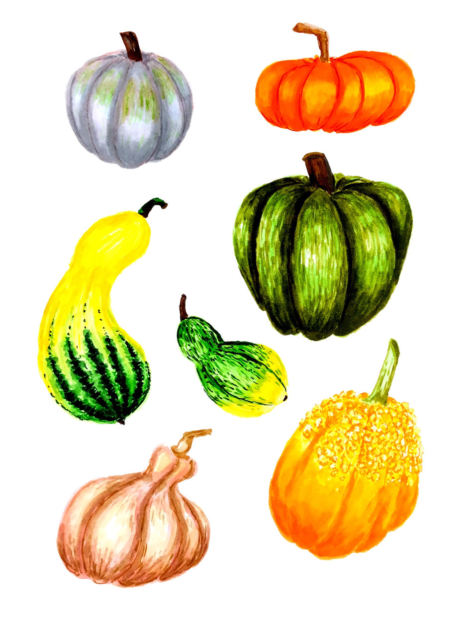 squash_collection.jpg