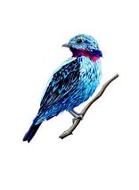 blue_bird_.jpg