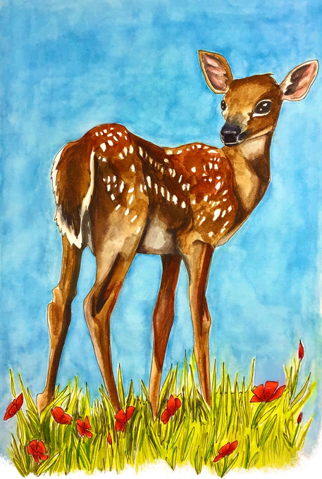 fawn_in_poppies.jpg