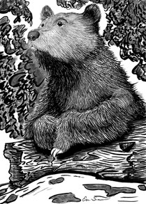 Posed Bear