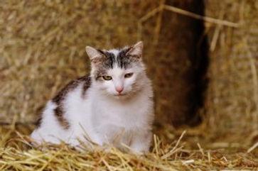 barn-home-cats.jpg